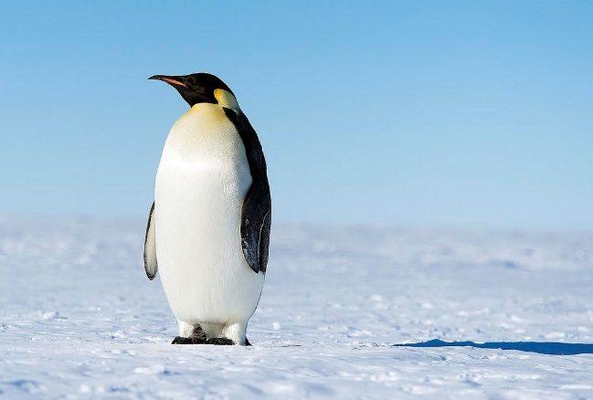 Penguin Now Part of Google's Core Algorithm